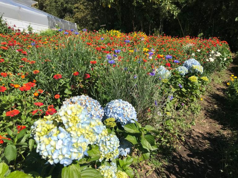 flower-tour-2